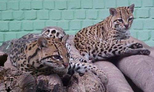 zoológico dois irmãos recife