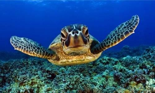 mergulho em buzios - tartaruga 3