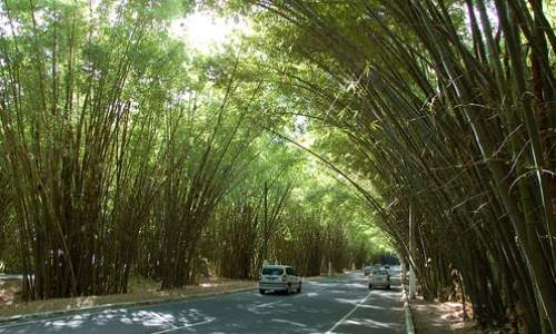 Como chegar a praia do Forte – Bahia 05