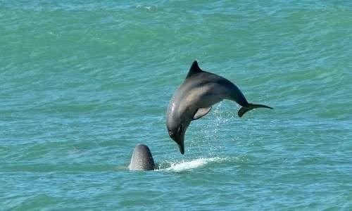 Praia de Pipa, a praia mais badalada do Rio Grande do Norte - golfinhos na praia de pipa