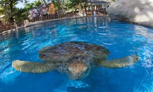 tartaruga marinha do projeto tamar