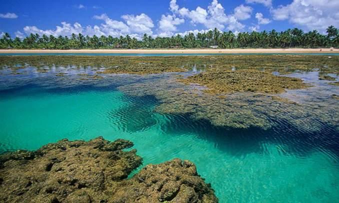piscinas naturais praia do forte